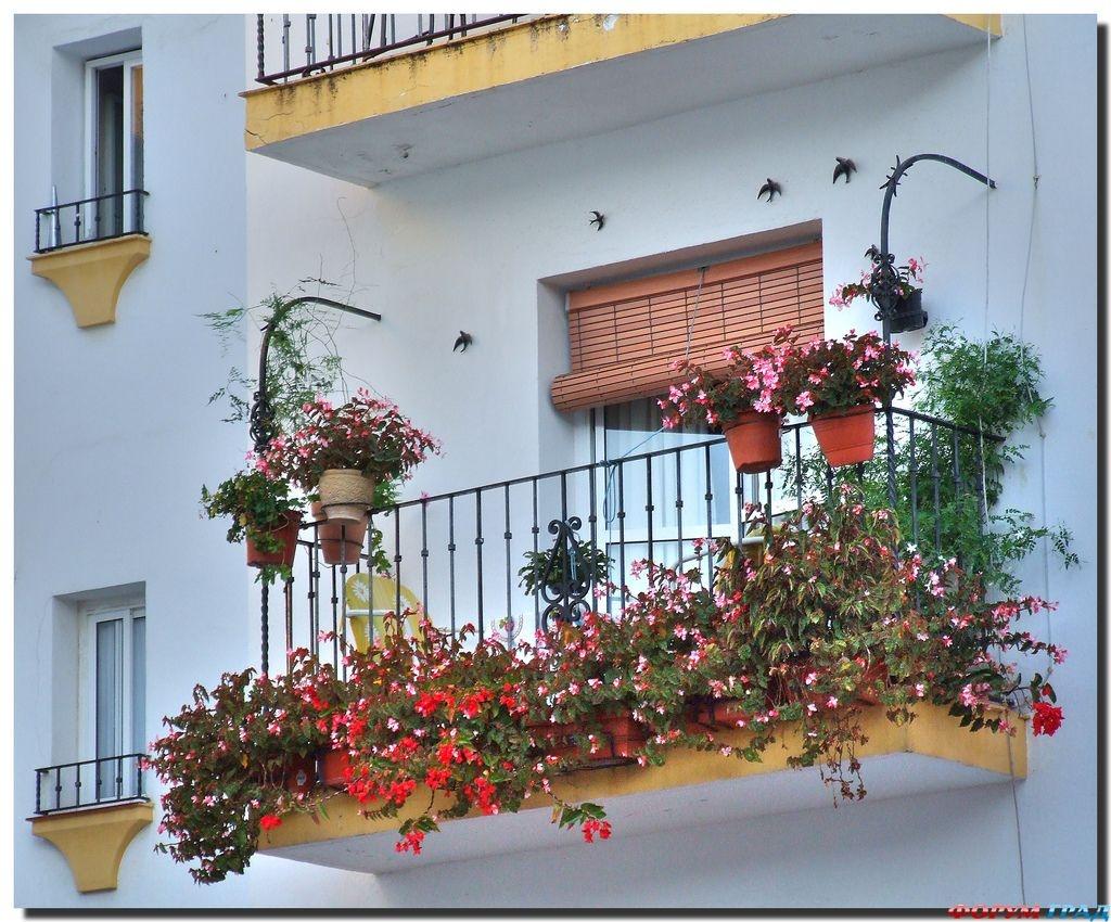 Мой балкон-2016 продолжение мои лилии наша.