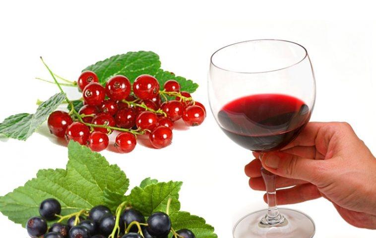 Вино из красной смородины в домашних