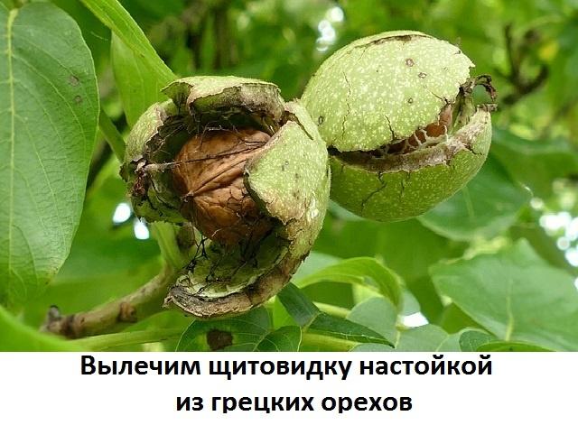 Рецепт от зоба на грецких орехах