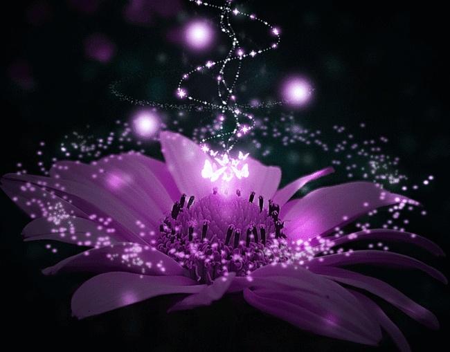 Анимированные цветы