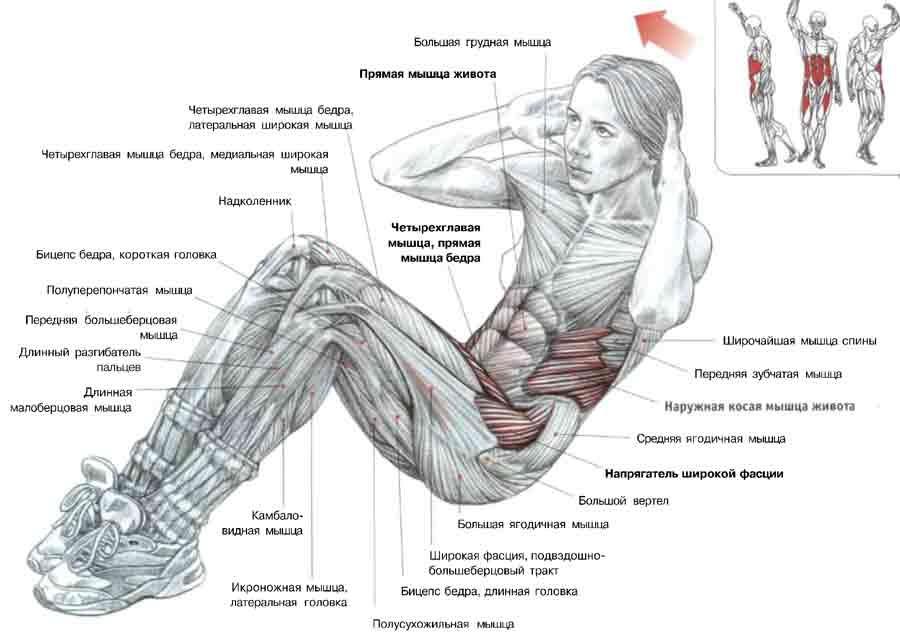 Как качать мышцы девушке в домашних условиях