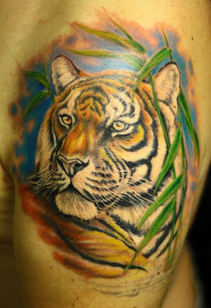 Тату тигры на плече мужские