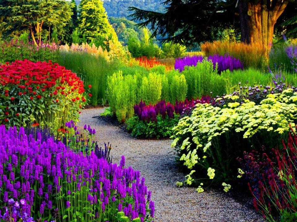 Красивые цветы многолетники в саду