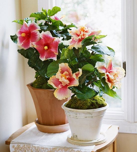 Не цветущий домашний цветок