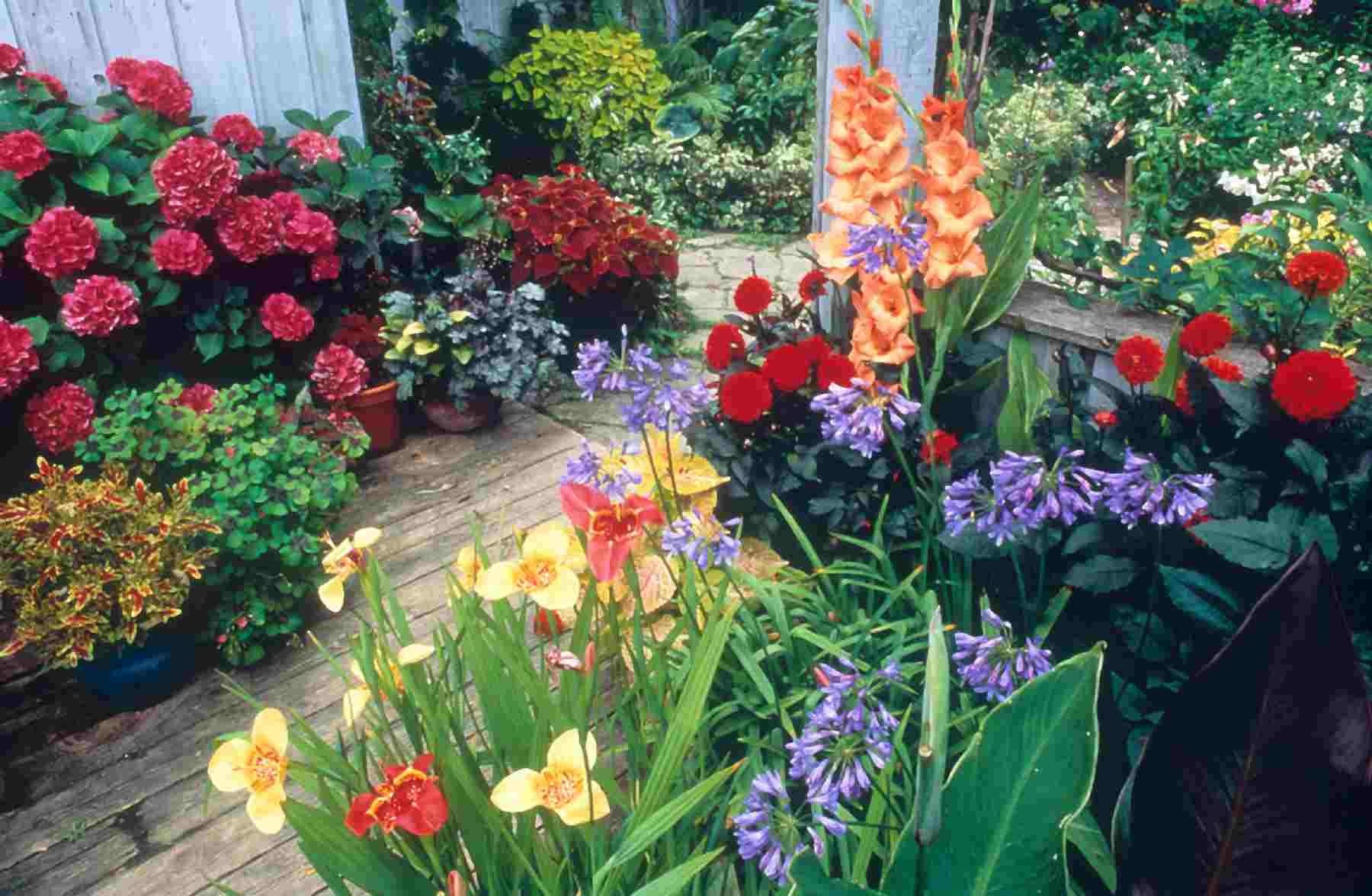 Цветы для сада однолетники с