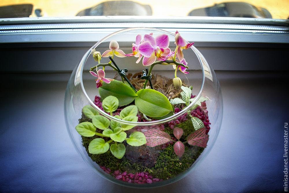 Флорариум из орхидей