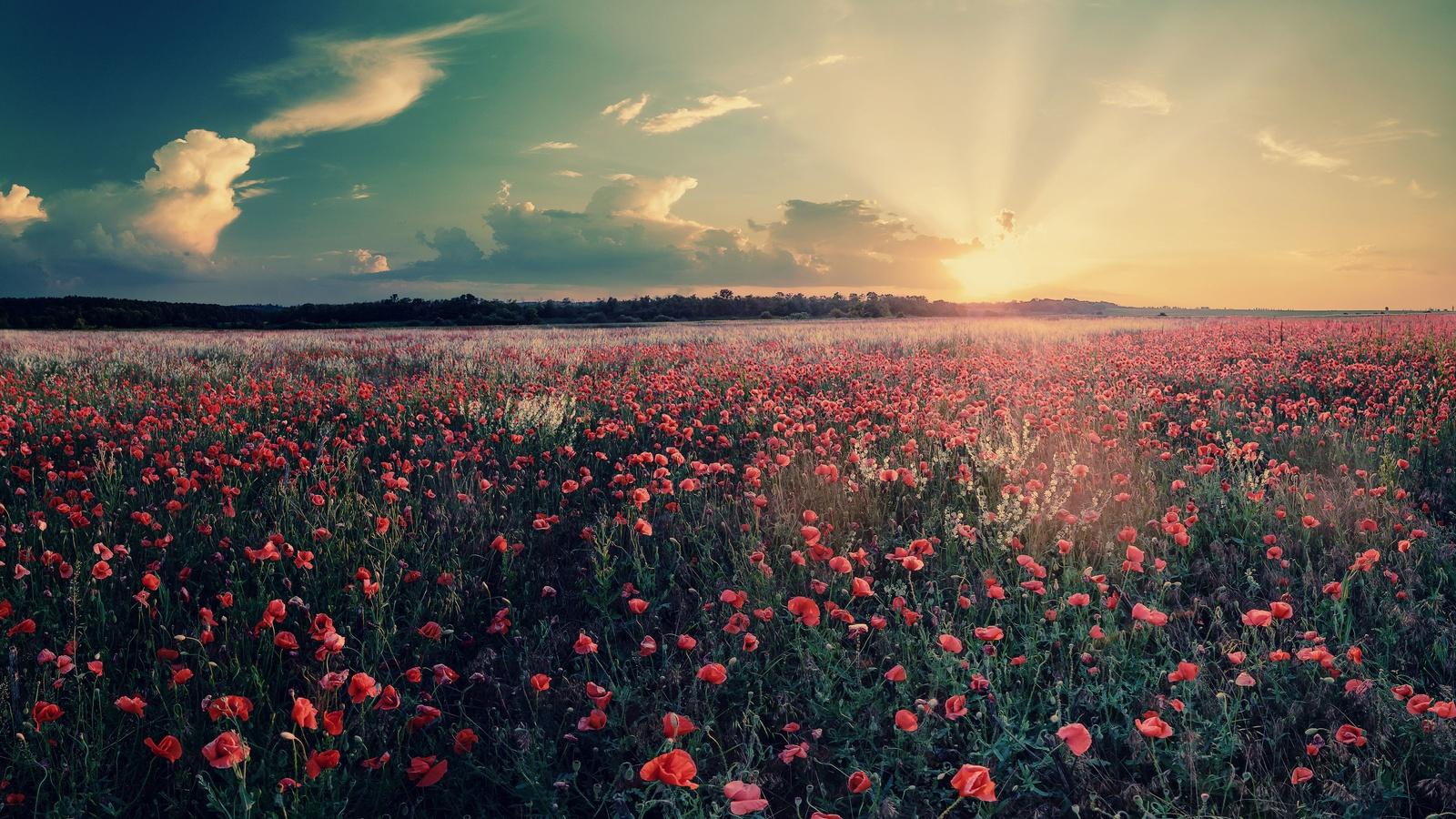 Фото цветы на поле hd