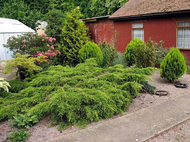 Рокарий из хвойников перед домом