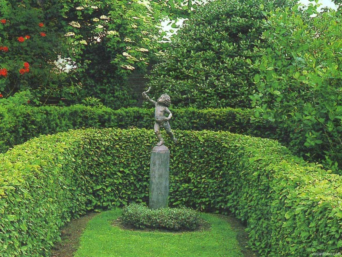 Зеленая изгородь на даче