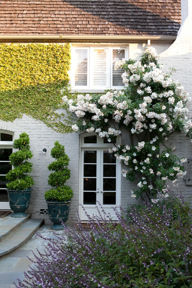 Ландшафтный дизайн из роз вьющиеся