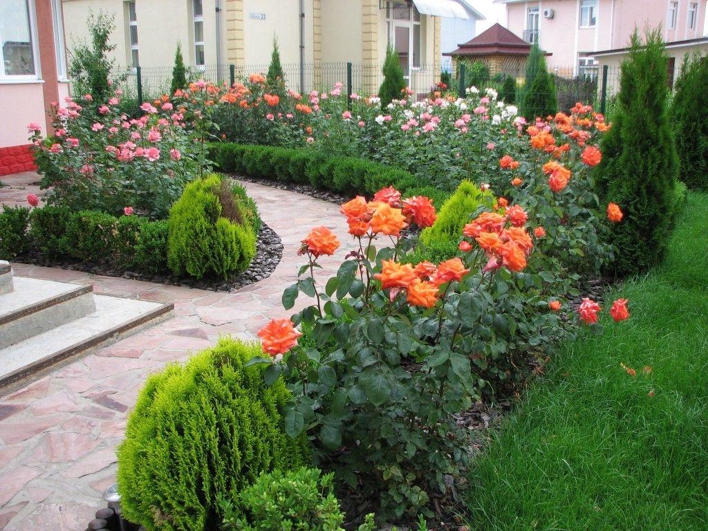 Ландшафтный дизайн в саду розы