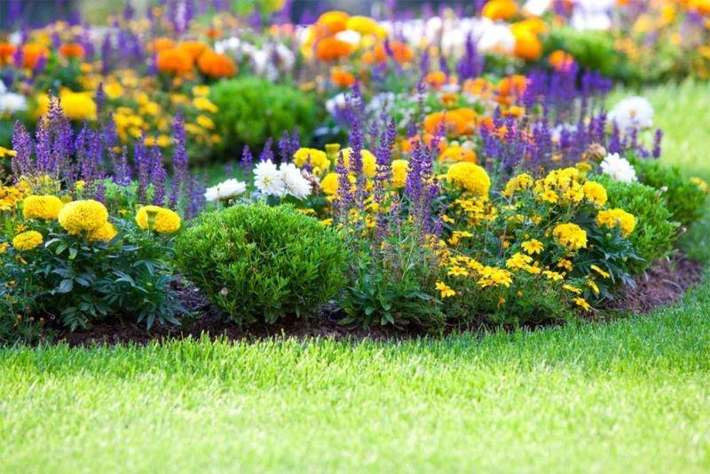Цветы цветущие все лето