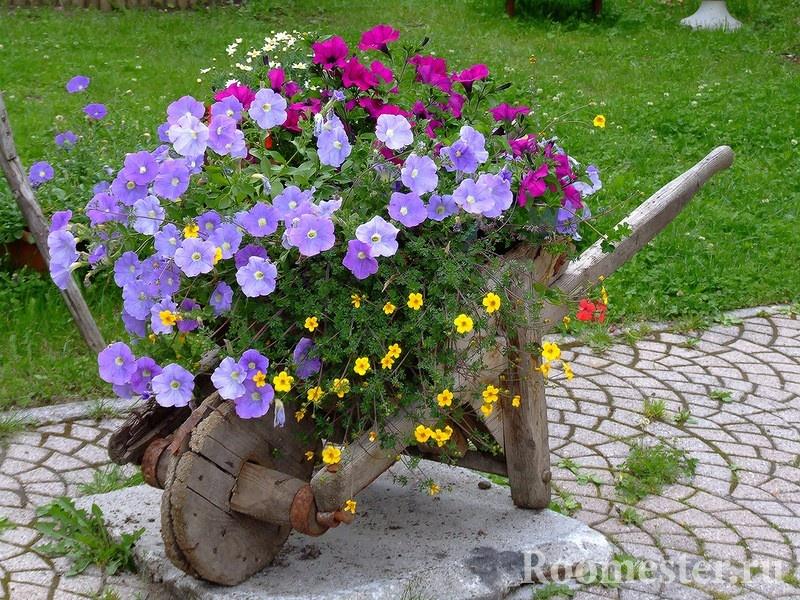 Фото красивых однолетних цветов для дачи