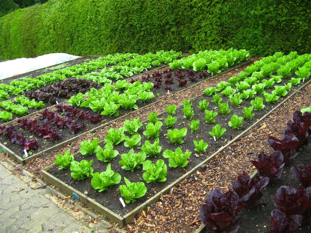 Микроэлементы для огорода своими руками