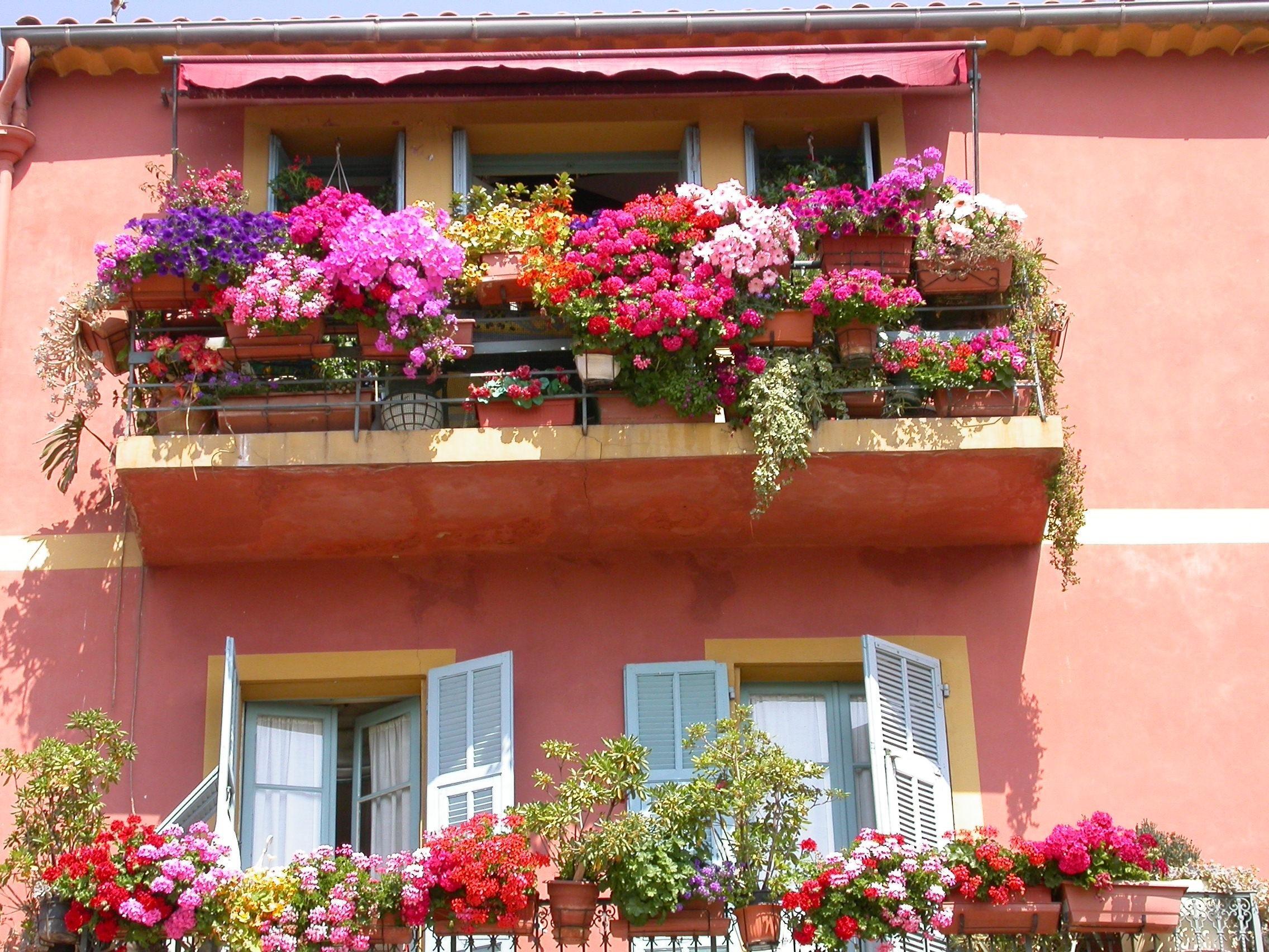 Названия цветов для балкона (63 фото): балконные вьющиеся и .