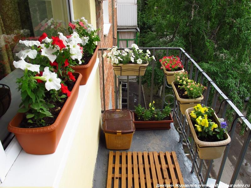 Что нужно знать об озеленении балкона или лоджии.