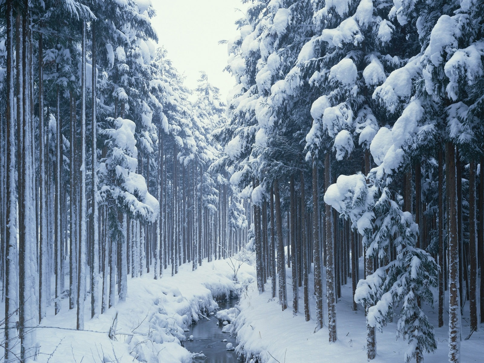 awesome nature wallpapers winter - photo #4
