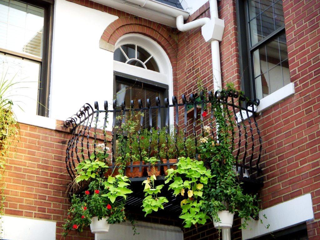 Как сделать вертикальное озеленение окон, балконов и террас .
