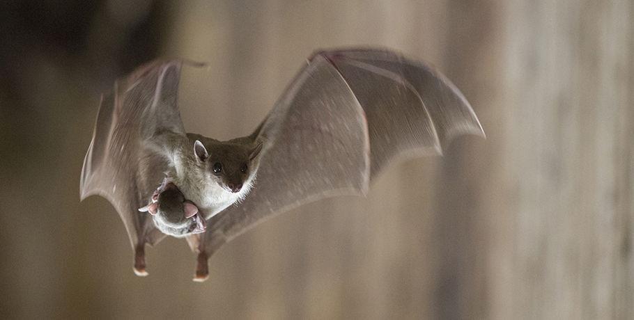 Что означает, если летучая мышь села на окно?