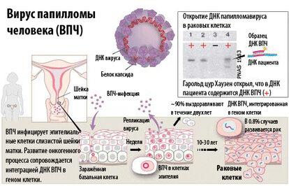 hpv 16 virus loswerden)